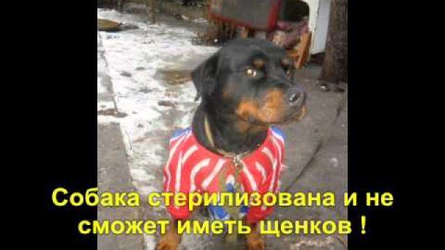 Пропажа собаки.