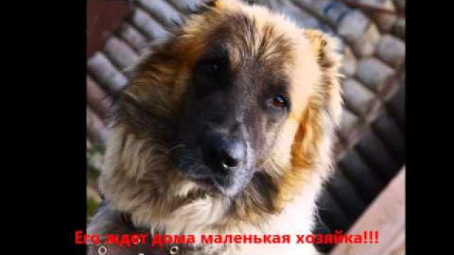 Пропала собака. Тереньга, Ульяновская обл. Россия