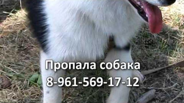 Пропала собака. 7.11.2013. Вятка Today