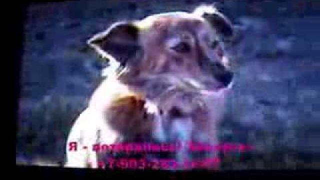 Пропала собака. Центр Москвы