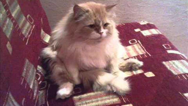 Пропал кот, Отрадный, Самарская область